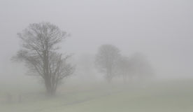 Foggy trees. Misty trees in the fog giving an ethereal quality Royalty Free Stock Image