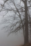 Foggy Trees. A mysterious fog envelopes shoreline and its oak trees. Like tentacles, the oak's branches welcome the spooky mist into its grasp royalty free stock photos