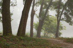Foggy trees in park Royalty Free Stock Image