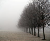 Foggy trees. A row of trees in a foggy landscape Royalty Free Stock Photography