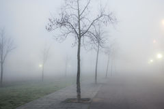 Foggy urban park with winter trees Royalty Free Stock Photography