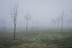 Foggy urban park with winter trees Stock Photography