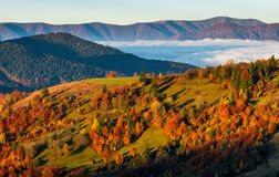 Foggy valley behind the hill at autumn sunrise. Colorful foliage on trees in morning light Stock Photo