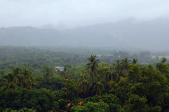 Foggy Vegetation of Sri Lanka Stock Photography