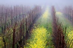 Foggy Vineyard stock photos