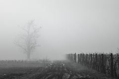 Foggy vineyard Stock Images