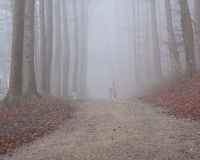 Foggy walk in the forest Stock Photo