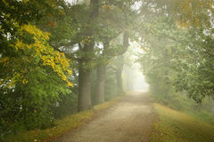 Foggy way. Early foggy morning in the forest by the way Stock Photography