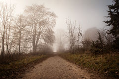 Foggy way in the morning Royalty Free Stock Photography