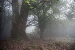 Foggy Weather in Kerala Stock Images