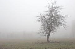 Foggy weatrher Stock Photo