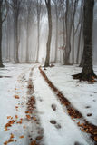 Winter landscape into the forest Royalty Free Stock Photography
