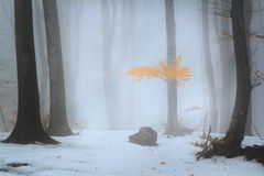 Winter foggy landscape into the forest Stock Image