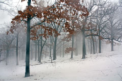 Foggy Winter Forest 11 Stock Images