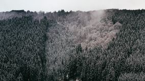 Foggy Winter Forest stock video