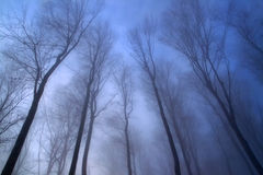 Foggy winter forest crown fairytale Stock Photos