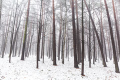 Foggy winter forest Royalty Free Stock Photo