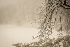 Foggy winter lake and sailfish with covering the branches Stock Photo