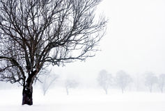 Foggy winter landscape Stock Photos