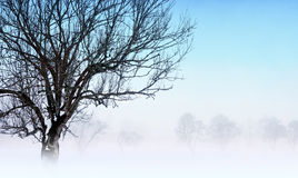 Foggy winter landscape Stock Image