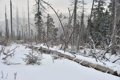 Foggy winter landscape. Stock Photos