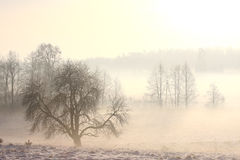 Foggy winter landscape in cold day Royalty Free Stock Photos