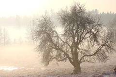 Foggy winter landscape in cold day Stock Image