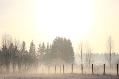 Foggy winter landscape in coutryside Stock Photos