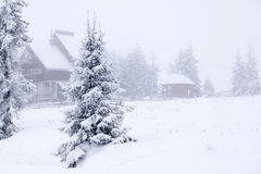 Foggy winter landscape with firs Stock Images