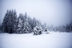 Foggy winter landscape with firs Stock Photos