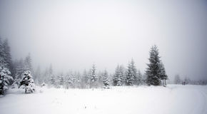 Foggy winter landscape with firs Royalty Free Stock Images