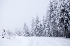 Foggy winter landscape with firs Stock Photo