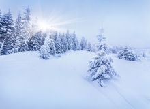 Foggy winter landscape in forest. Stock Image