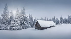 Foggy winter landscape in the forest. Stock Photo