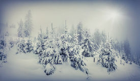 Foggy winter landscape in the forest. Royalty Free Stock Images