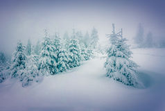 Foggy winter landscape in the forest. Royalty Free Stock Image