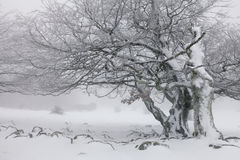 Foggy winter landscape in the forest Stock Images