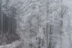 foggy winter landscape - frosty trees in snowy forest Royalty Free Stock Image