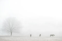 Foggy winter landscape with horses silhouettes Royalty Free Stock Photography