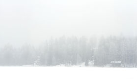 Foggy winter landscape of lake shore Stock Photo