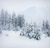 Foggy winter landscape in the moountains. Royalty Free Stock Photography