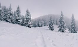 Foggy winter landscape in mountain forest Royalty Free Stock Photo