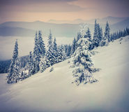 Foggy winter landscape in mountain forest Stock Images