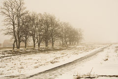 Foggy winter landscape, sepia Stock Image