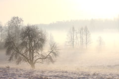 Foggy winter landscape with tree Royalty Free Stock Images