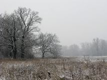 Foggy winter landscape Royalty Free Stock Photography