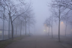Foggy winter landscape on a urban park Royalty Free Stock Photography