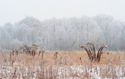 Foggy winter meadow Royalty Free Stock Images