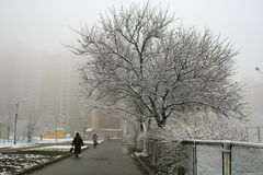 Foggy winter morning in the city, and pedestrians Stock Photos