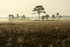 Foggy Winter Morning in the Everglades. Fog spreads over an Everglades landscape in Big Cypress National Preserve Stock Image
